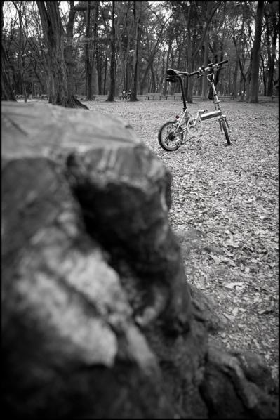 自転車の時期