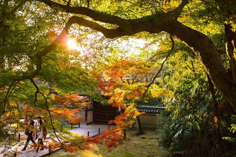 晩秋の京都を歩く(4)