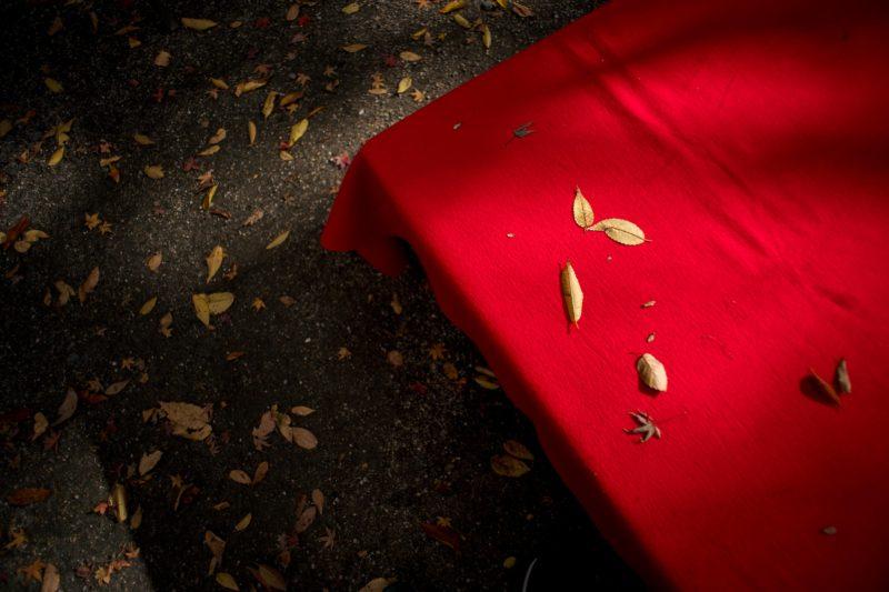 今日見た落ち葉を表現できる写真が無かった