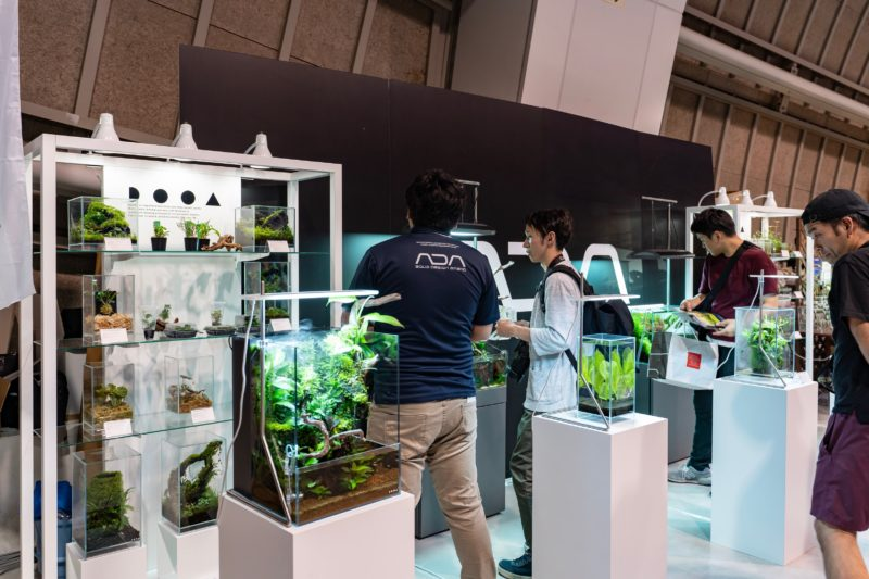 天下一植物界 2019(3)