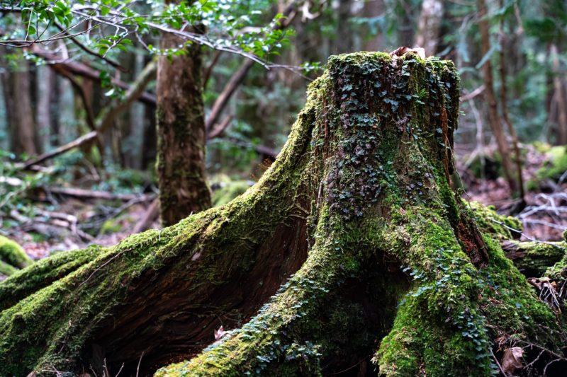 自然界の苔は最高に美しい